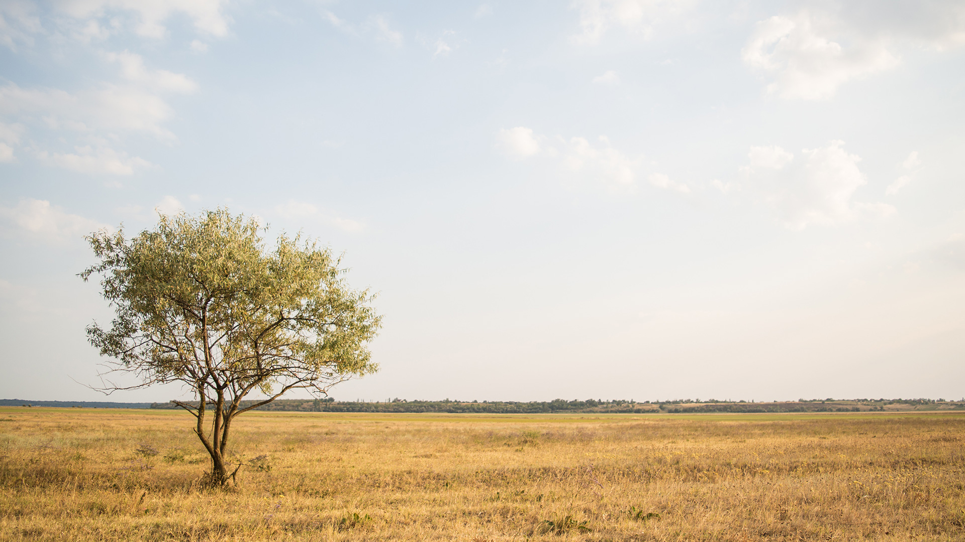 green-leafed-tree-near-withered-grass